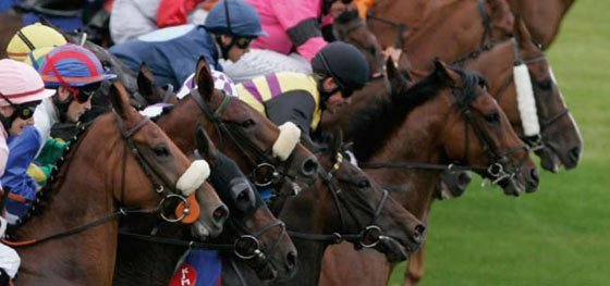 Cheltenham Gold Cup stats,racing, horseracing, horseracing ireland, leopardston, gold cup