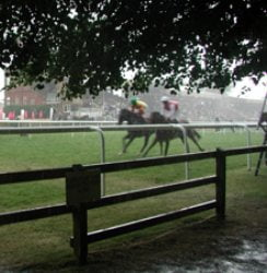 Betting Tips for Newmarket: Outsider of five may be worth second look