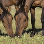 Make sure you choose the right supplements for your horse