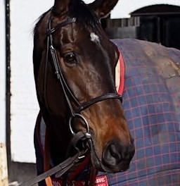 Dean's tips for the Cheltenham Gold Cup 2013