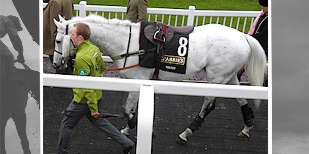 Grand National Grey Horses