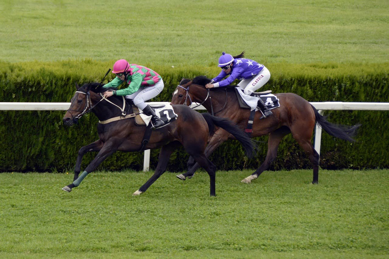 Boom Time for Horse Racing in New Zealand