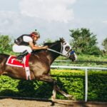 6 Essential Tips for Horse Betting All Beginners Should Follow